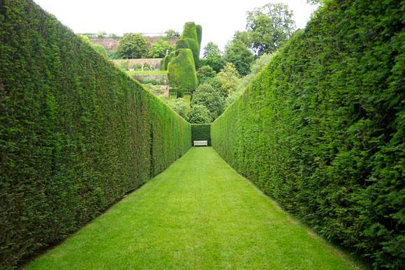 sövény, kertépítés budapest, kertépítés, kertöntöző budapest, kertöntöző, kertöntözés budapest, kertöntözés