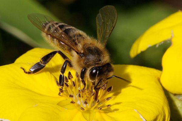 méhek a kertben, kertépítés, kertépítés Budapest, kertépítés Budapesetn