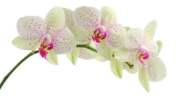 orchidea, kertépítés Budapest, kertöntözés Budapest, kerttervezés Budapest