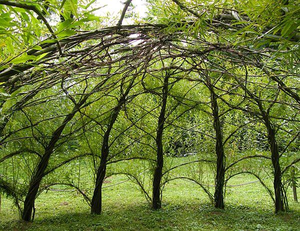 fűzfavessző búvóhely, búvóhely a kertben