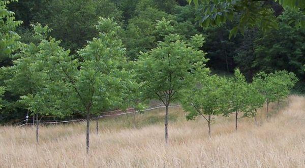 fiatal fa, fa átültetés, kertépítés, kertépítés Budapest
